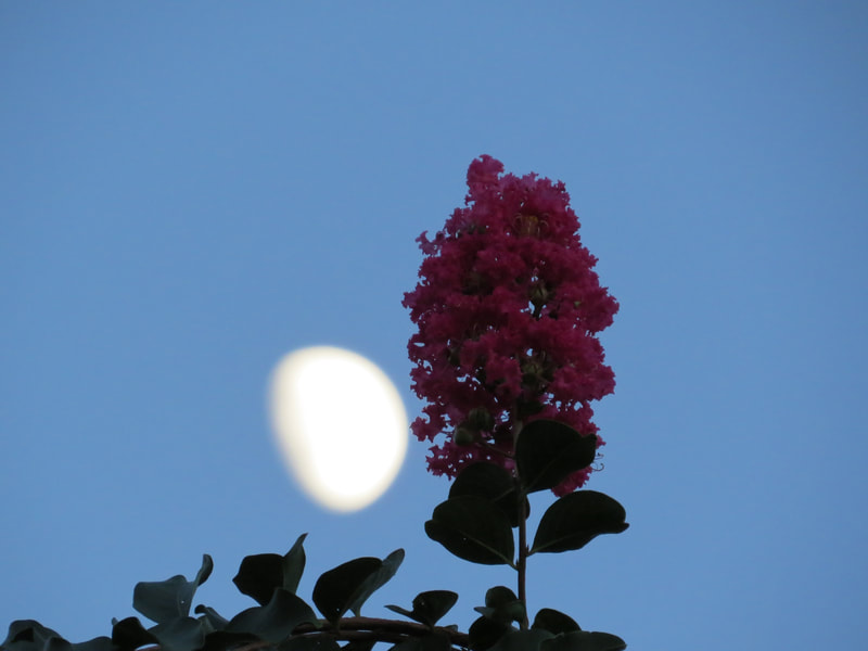 moon and flower